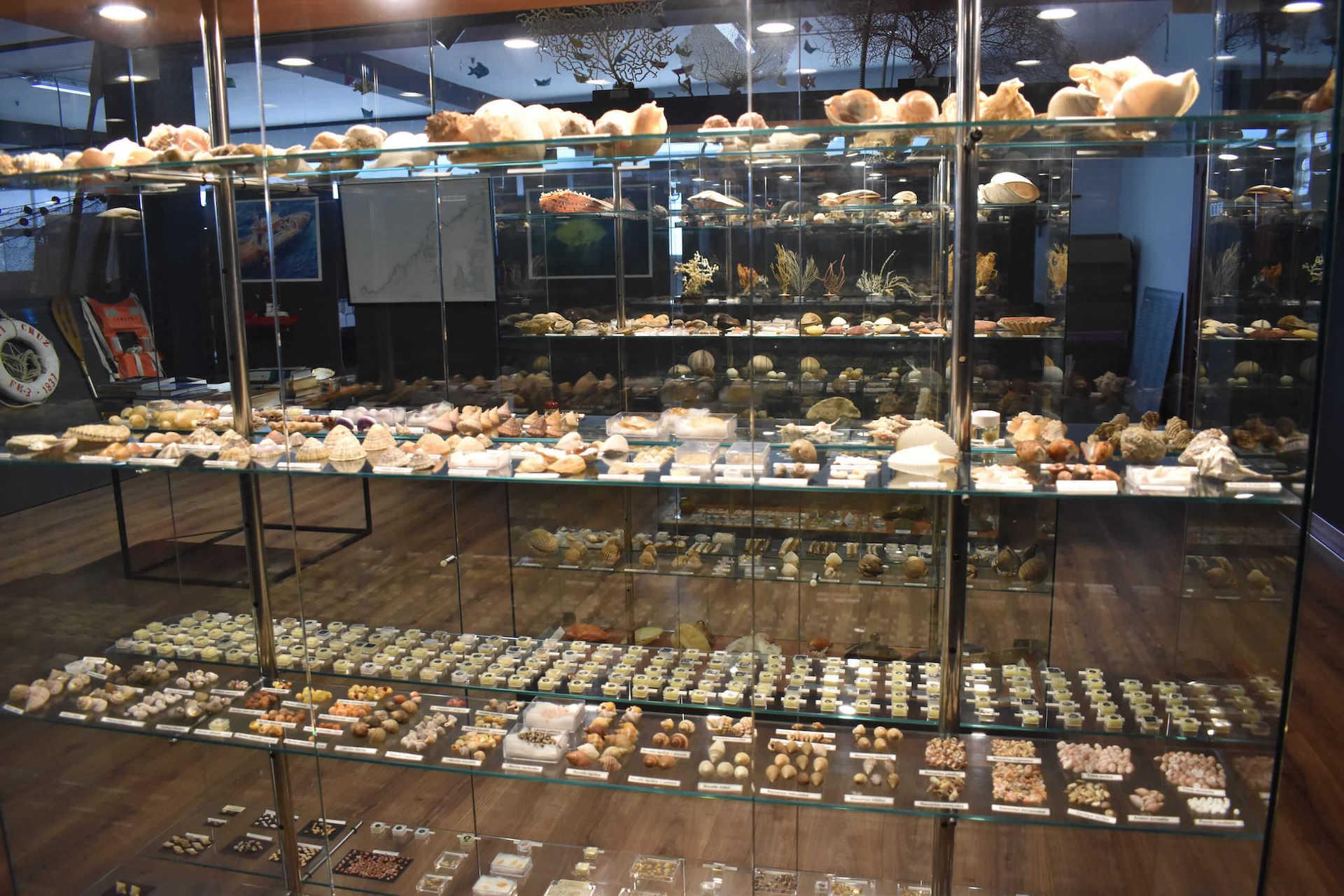 Coleccion interesante de conchas y malacologia en la exposición - Manuel Suarez