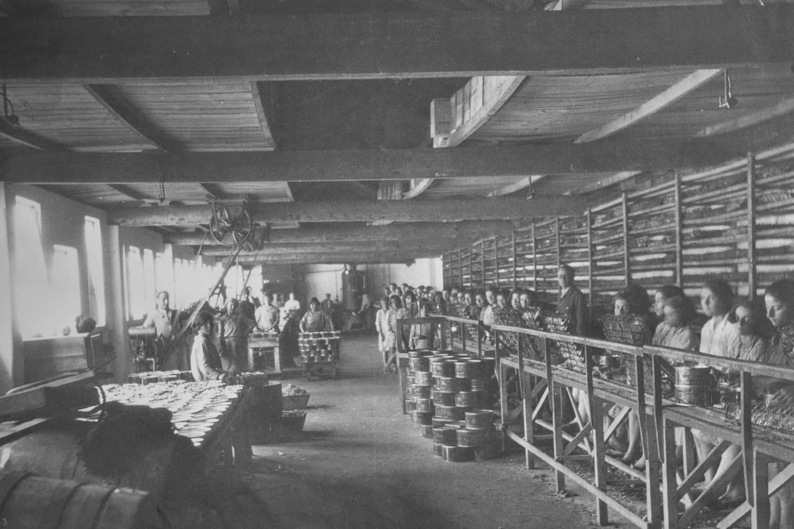 Mujeres de Cedeira trabajando en fabrica de conserva