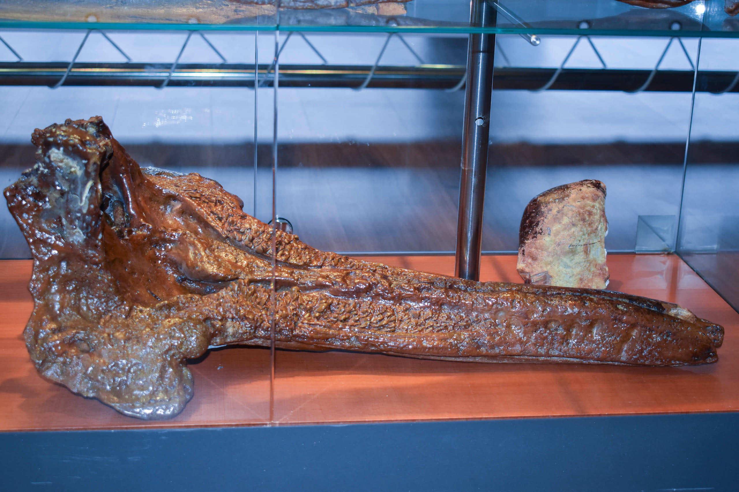 Resto de ballena recogido en playa de Cedeira - Pedazos de Historia